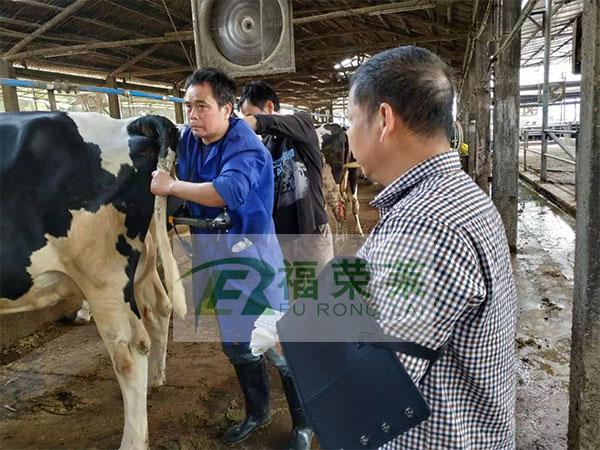 广东清远燕洲奶牛场牛用B超培训