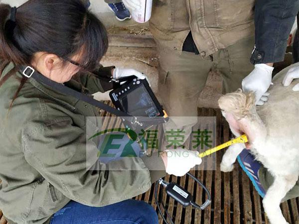 贵州羊场测羊B超培训