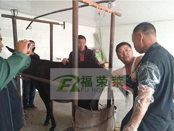 内蒙古赤峰畜牧局驴用B超培训