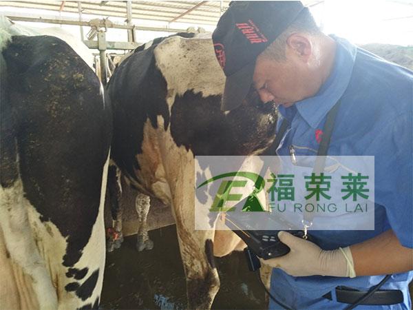 唐山迁安二牛奶牛场牛用B超培训