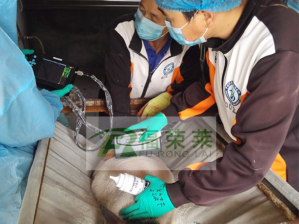 中国科学院动物研究所小香猪背膘仪培训