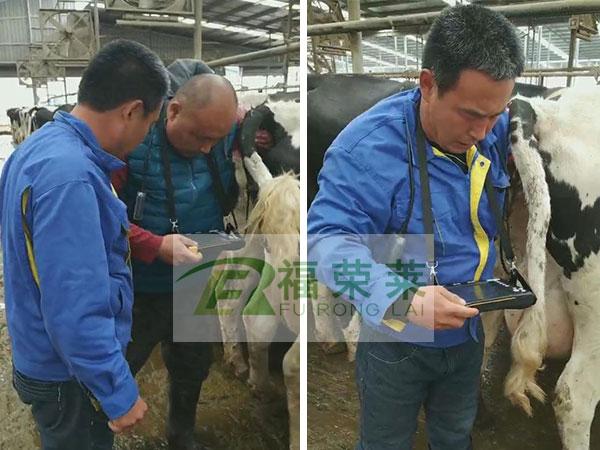 天津九福奶业牛用B超培训