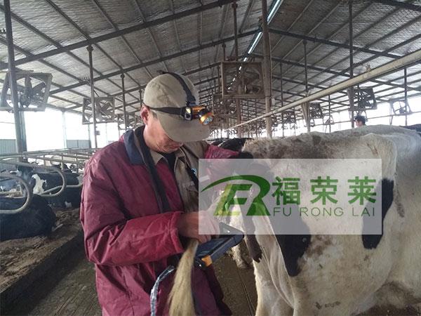 河北沧县华盛奶牛场牛用B超培训