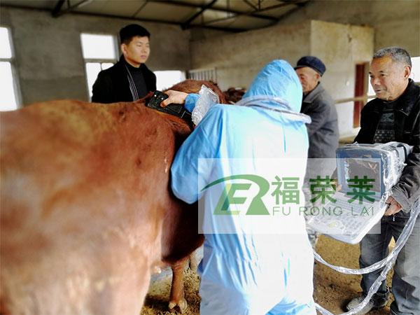平顶山郏县红牛背膘眼肌面积培训