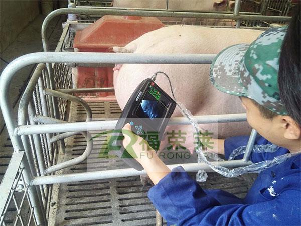 猪用B超使用方法