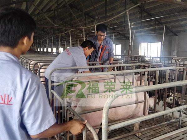 昊月农业猪用B超培训