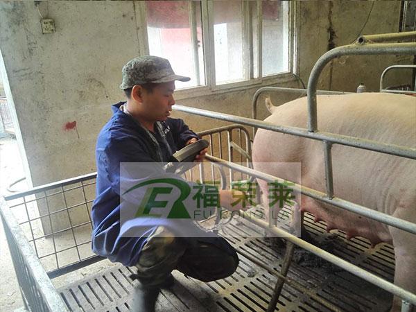 周口猪场猪用B超培训