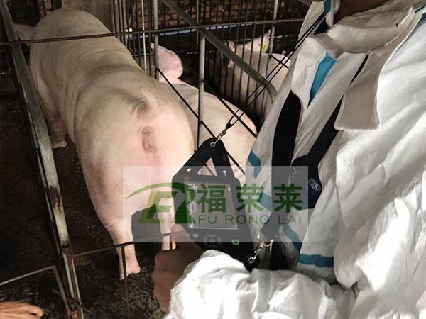 广东温氏猪用B超培训