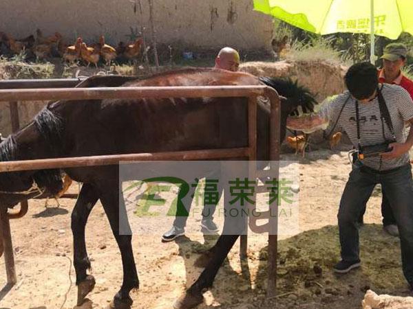 新疆马场马用B超培训