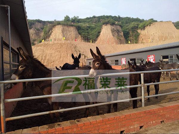 山西吕梁肉驴养殖场驴用B超培训