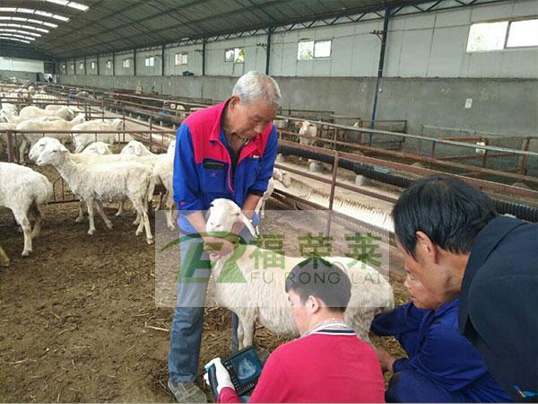 西安兴隆羊场羊用B超培训