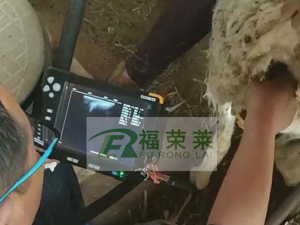 内蒙古赤峰敖汉旗羊用B超培训