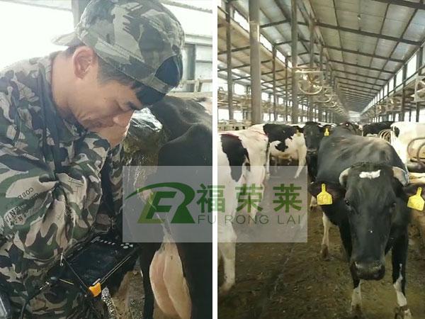 黑龙江大庆中林牧业牛用B超培训