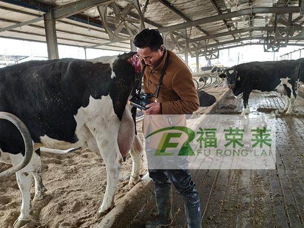 江苏宿迁锡源牧场牛用B超培训