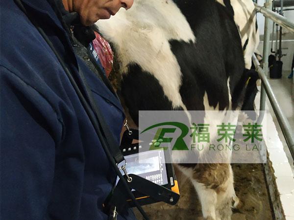 内蒙阿拉善福地农牧牛用B超培训