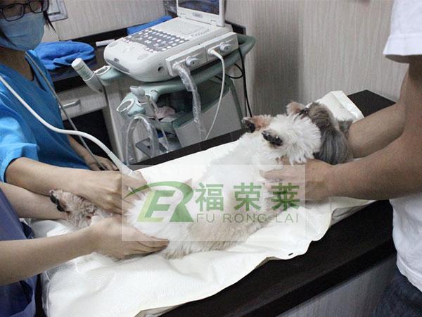 南京宠物医院宠物B超
