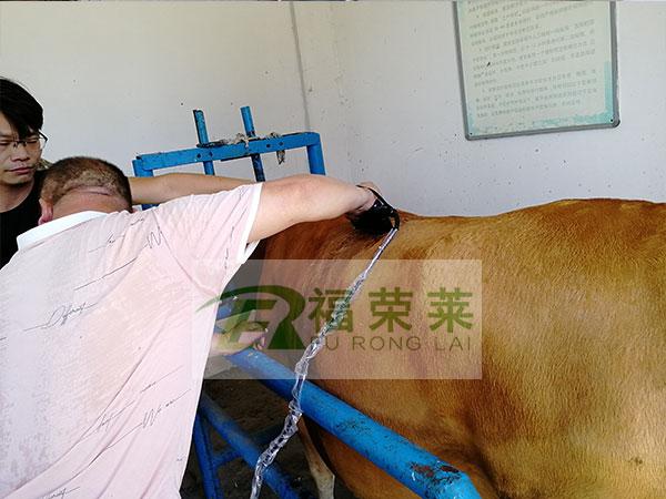 南阳黄牛良种繁育场背膘测定培训