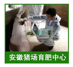 安徽猪场育肥中心