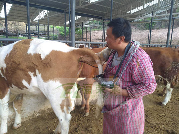 牛用B超功能