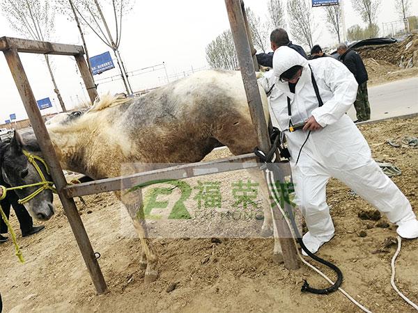 马用B超测母马怀孕使用方法
