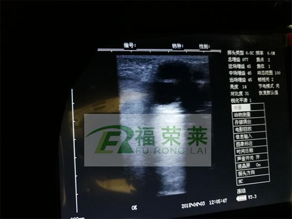 马用B超图像